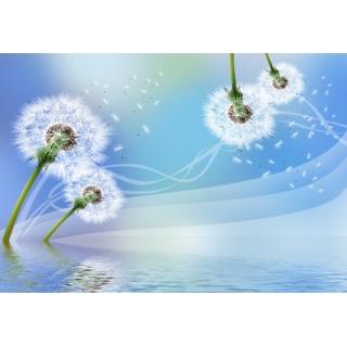 花彩印象系列(64-3-FWY3V0214)