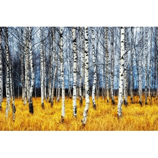 世界風景系列(100-4-WBH0822)