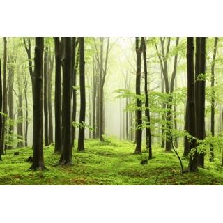 世界風景系列(100-2-WBH0823)