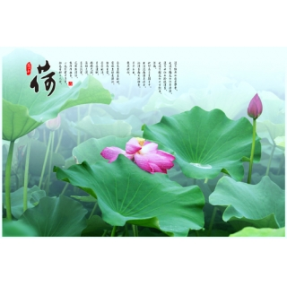 中國書畫系列(140-1-FWY3V0518)